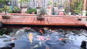 Top 10 đơn vị thiết kế hồ cá koi chất lượng giá rẻ tại Tphcm